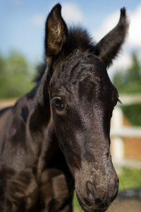 A foal received the medical care she so desperately needed
