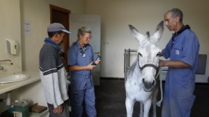 Change is happening to centuries old treatment for working animals in Fez.
