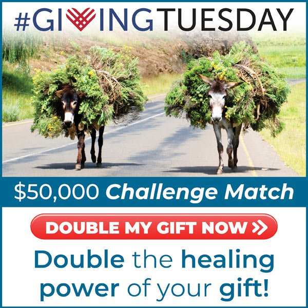 Giving Tuesday $50,000 Challenge Match. Click here to double the healing power of your gift!