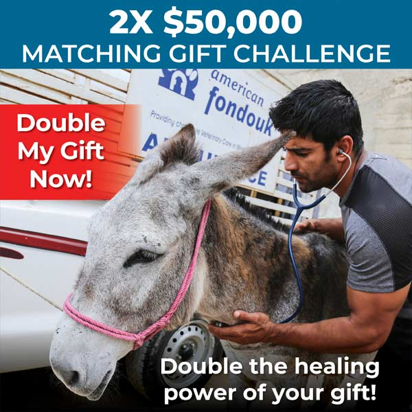2x$50,000 matching gift challenge - double your gift now